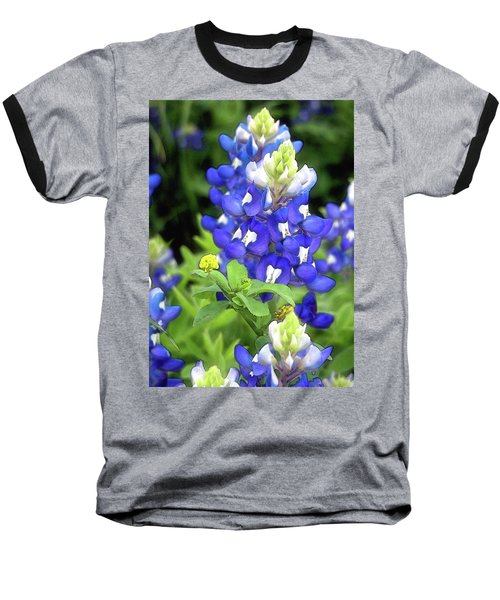 Bluebonnets Blooming Baseball T-Shirt by Stephen Anderson