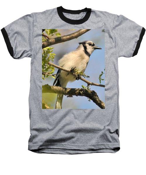 Bluejay 310 Baseball T-Shirt