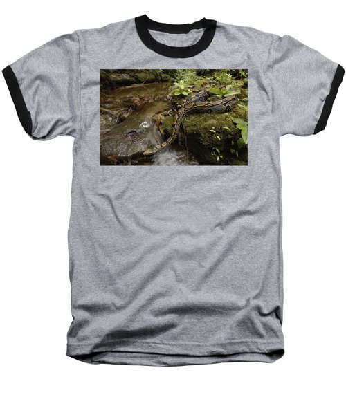Boa Constrictor Crossing Stream Baseball T-Shirt by Pete Oxford