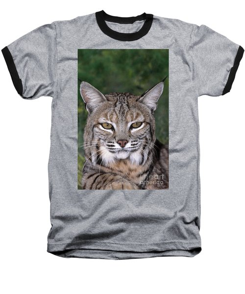 Bobcat Portrait Wildlife Rescue Baseball T-Shirt by Dave Welling