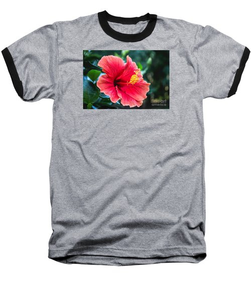 Baseball T-Shirt featuring the photograph Bold And Beautiful by Arlene Carmel