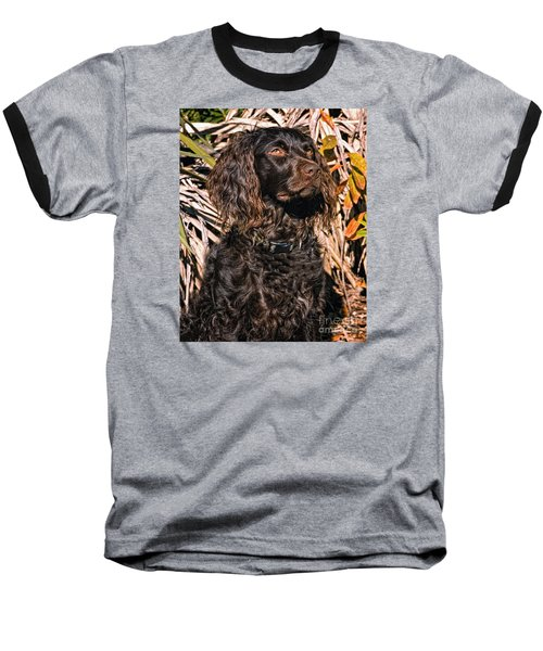 Boykin Spaniel Portrait Baseball T-Shirt by Timothy Flanigan
