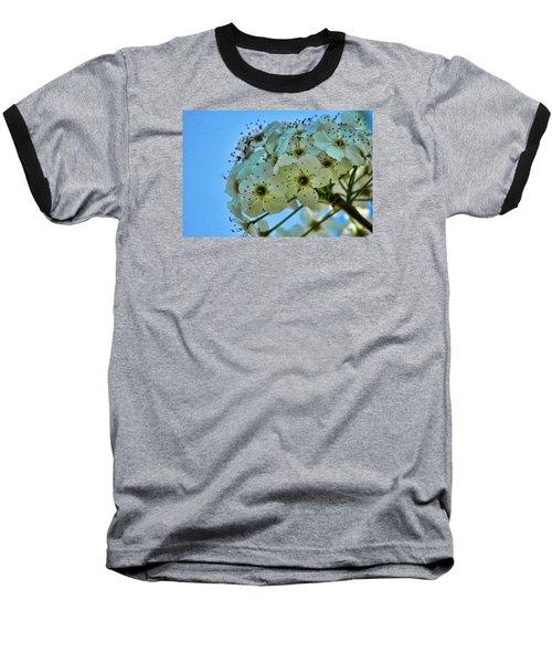 Bradford Pear I Baseball T-Shirt by Lesa Fine