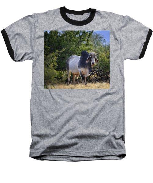 Brahma Cow Baseball T-Shirt