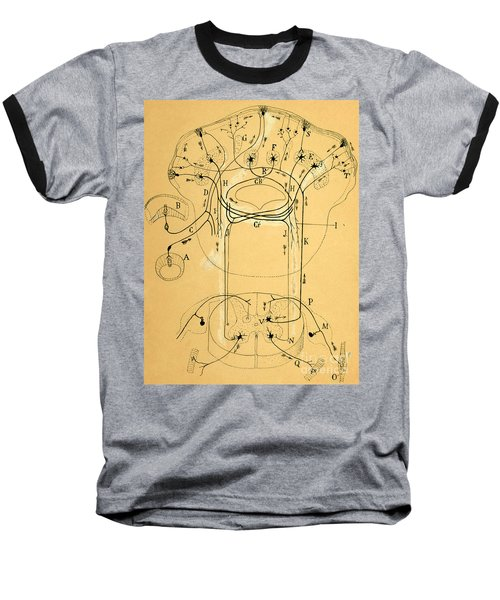 Brain Vestibular Sensor Connections By Cajal 1899 Baseball T-Shirt