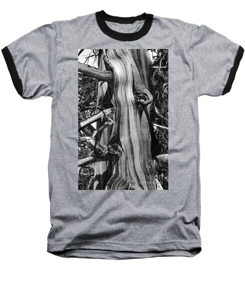 Baseball T-Shirt featuring the photograph Bristle-cone Pine-2 by Mae Wertz