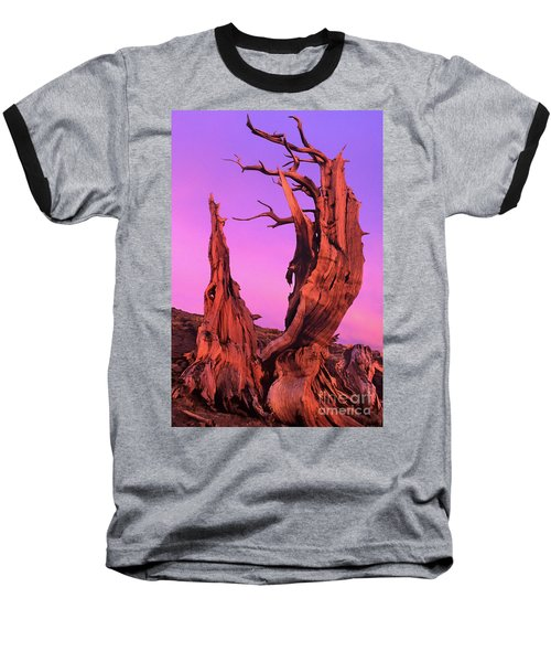 Baseball T-Shirt featuring the photograph Bristlecone Pine At Sunset White Mountains Californa by Dave Welling
