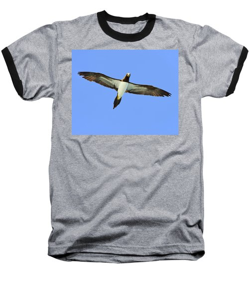 Brown Booby Baseball T-Shirt by Tony Beck