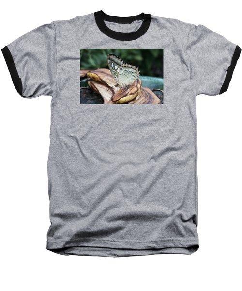 Brown Clipper Butterfly #3 Baseball T-Shirt