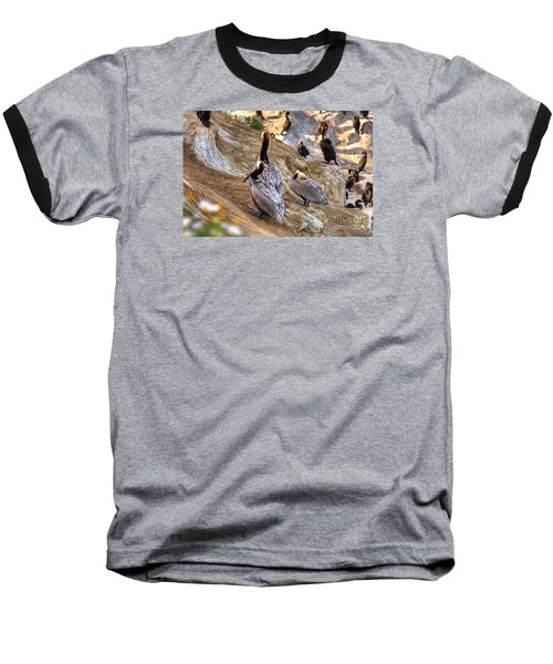 Brown Pelicans At Rest Baseball T-Shirt by Jim Carrell