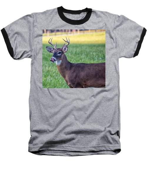 Buck Licking His Chops At Cades Cove Inside Of The Great Smoky Mountains National Park Baseball T-Shirt