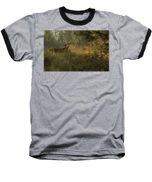 Bucks In Velvet Baseball T-Shirt by Loni Collins