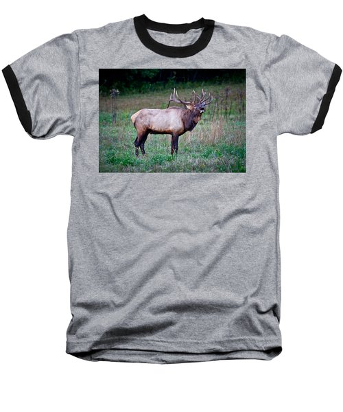 Bugle Solo From Bull Elk Baseball T-Shirt by John Haldane