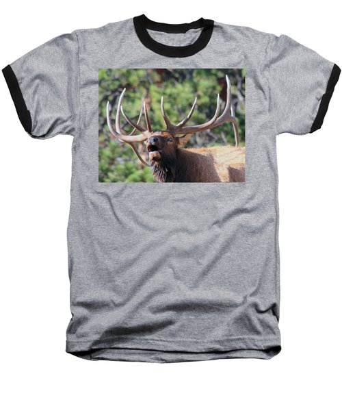 Bugling Bull Baseball T-Shirt