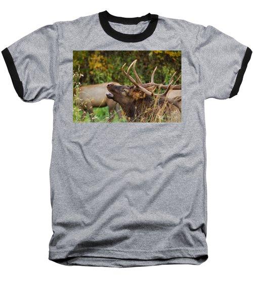 Bugling Bull Elk Baseball T-Shirt