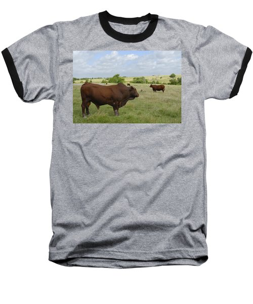Baseball T-Shirt featuring the photograph Bull And Cattle by Charles Beeler