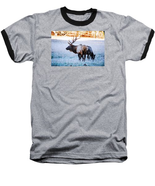 Bull Elk And Cow Baseball T-Shirt