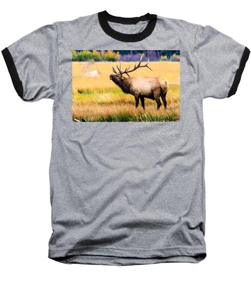 Bull Elk - Colorado Baseball T-Shirt