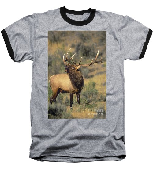 Bull Elk In Rut Bugling Yellowstone Wyoming Wildlife Baseball T-Shirt