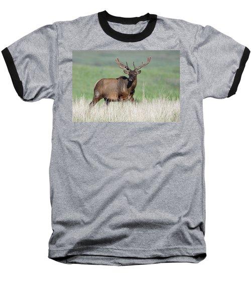 Baseball T-Shirt featuring the photograph Bull Elk In Velvet by Jack Bell