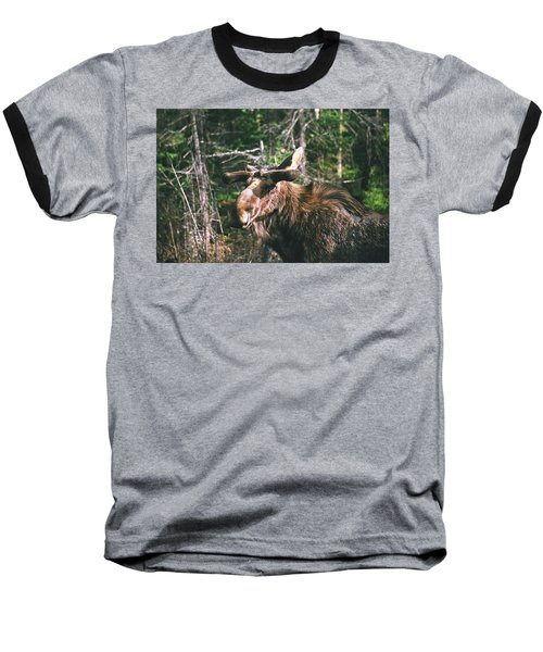 Bull Moose In Spring Baseball T-Shirt