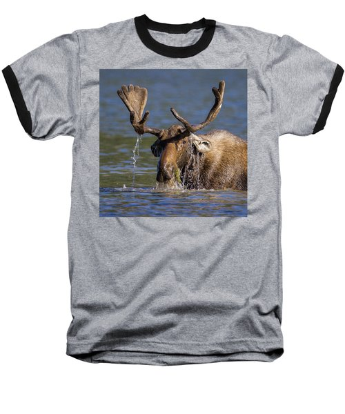 Bull Moose Sampling The Vegetation Baseball T-Shirt