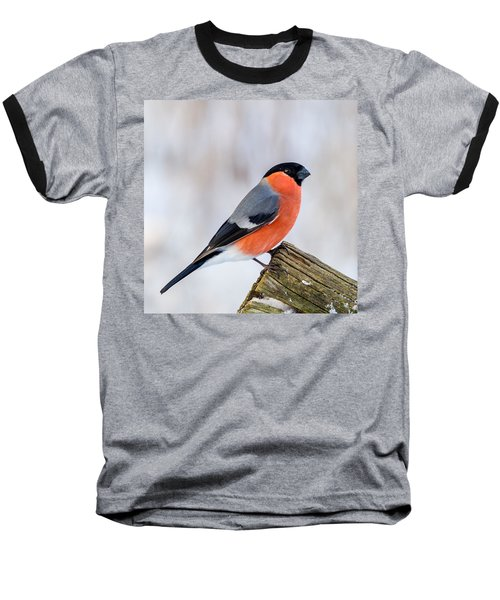 Bullfinch On The Edge Baseball T-Shirt