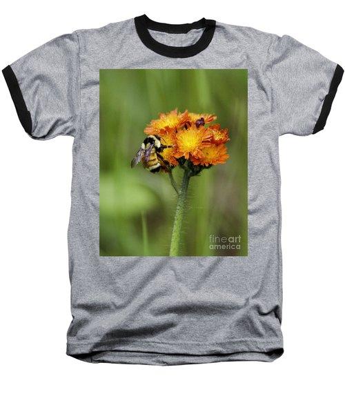 Bumble And Hawk Baseball T-Shirt
