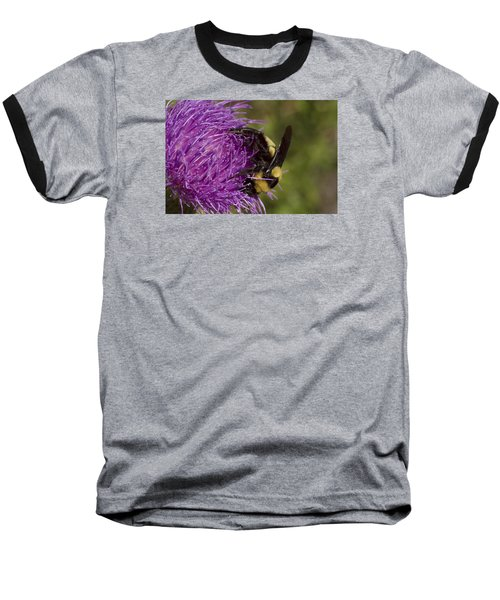 Bumble Bee On Thistle Baseball T-Shirt by Shelly Gunderson