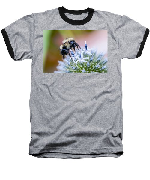 Bumblebee On Thistle Blossom Baseball T-Shirt