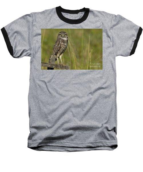 Burrowing Owl Stare Baseball T-Shirt by Meg Rousher