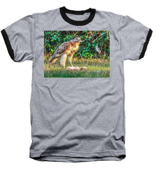 Buteo Jamaicensis Baseball T-Shirt by Rob Sellers