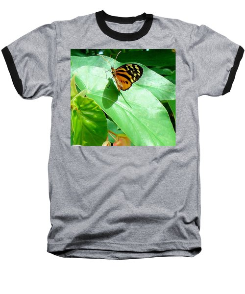 Baseball T-Shirt featuring the photograph Butterfly Chasing Shadow by Janette Boyd