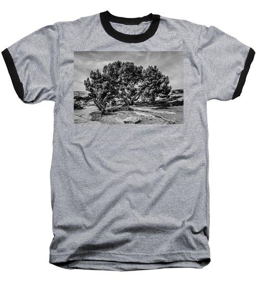 Bw Limber Pine Baseball T-Shirt