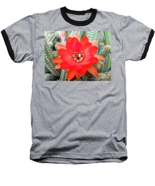 Cactus Flower Baseball T-Shirt by Ramona Matei