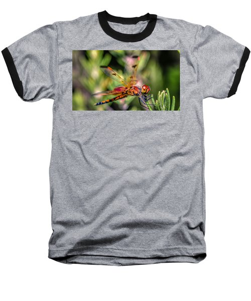 Calico Pennant Baseball T-Shirt by Rob Sellers