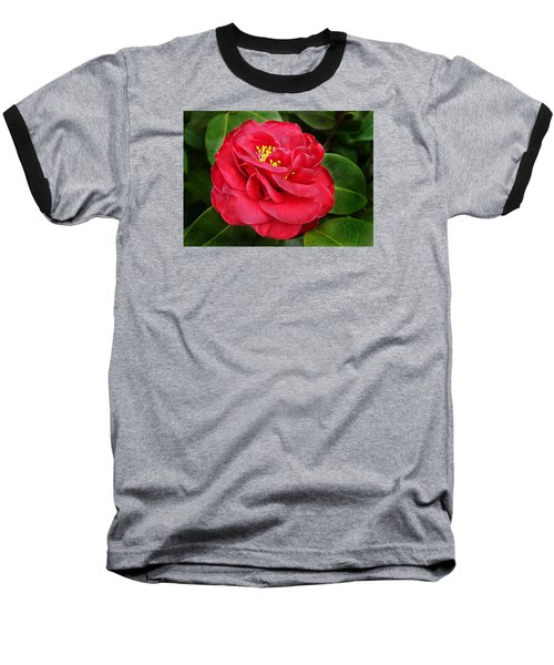 Camellia Japonica ' Dixie Knight ' Baseball T-Shirt by William Tanneberger