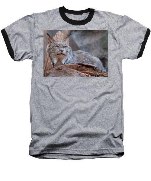 Canada Lynx Baseball T-Shirt by Bianca Nadeau