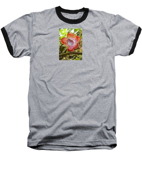 Cannonball Tree Flower Hawaii Baseball T-Shirt by Venetia Featherstone-Witty