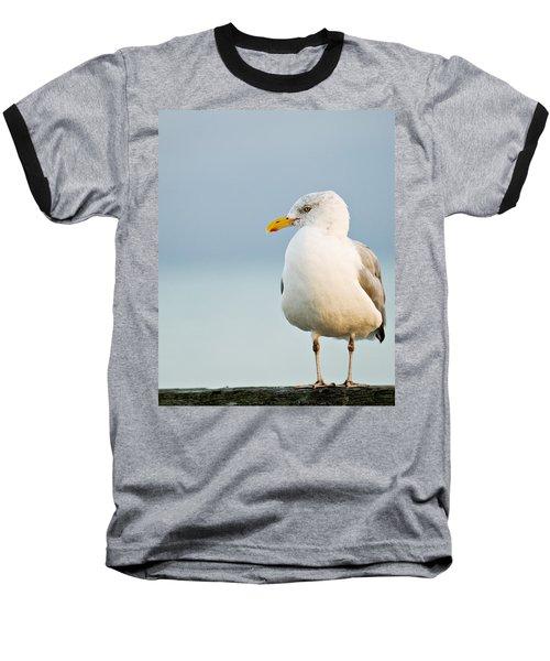 Cape Cod Seagull Baseball T-Shirt