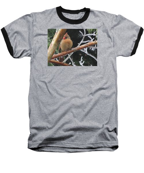 Cardinal Baseball T-Shirt by Marilyn Zalatan