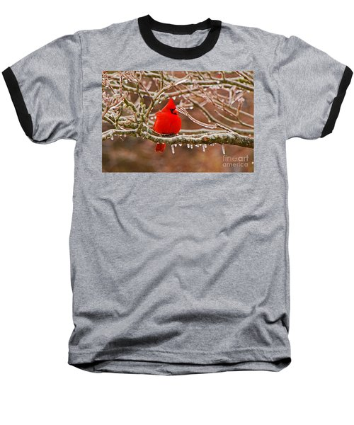 Cardinal Baseball T-Shirt by Mary Carol Story