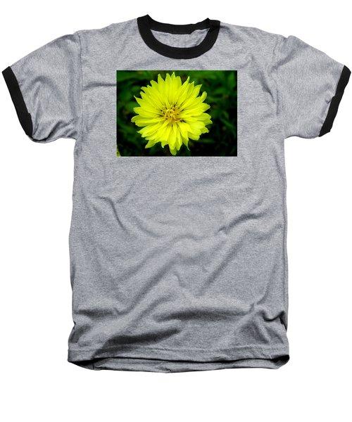 Wild Carolina Desert Chicory Baseball T-Shirt by William Tanneberger