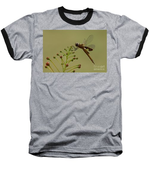 Carolina Saddlebags Baseball T-Shirt