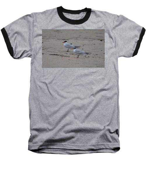 Baseball T-Shirt featuring the photograph Caspian Tern Young And Adult by James Petersen