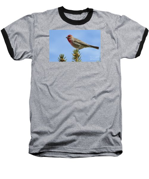Baseball T-Shirt featuring the photograph Cassin's Finch  by Janice Westerberg