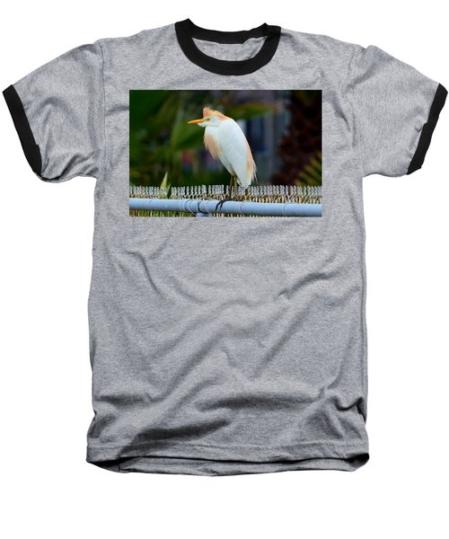 Cattle Egret Breeding Plumage Baseball T-Shirt by Debra Martz