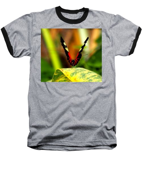 Cattleheart Butterfly  Baseball T-Shirt by Amy McDaniel