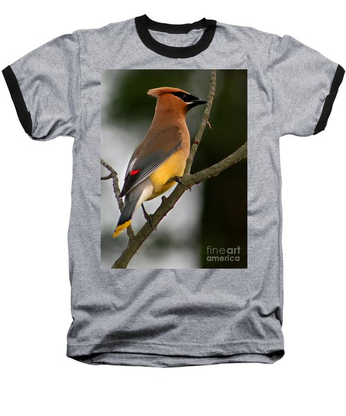Cedar Wax Wing II Baseball T-Shirt