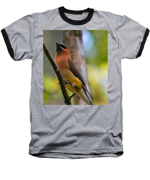 Cedar Wax Wing Baseball T-Shirt by Roger Becker